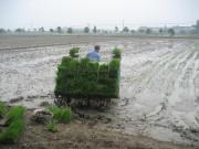 越南農機化需要跨越式發展