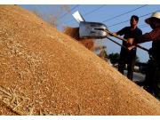 解码中国经济半年报:夏粮喜增3.3%
