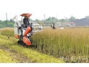 四問油菜生產全程機械化