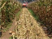 玉米收获正当时 艾禾籽粒直收机逐鹿南方