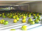 绿萌RMFD-100水果烘干机