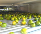 江西绿萌RMFD-100水果烘干机