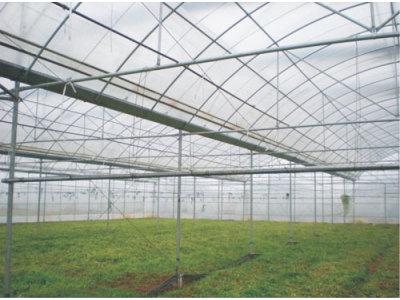 湖南志恒GLP连栋塑料温室