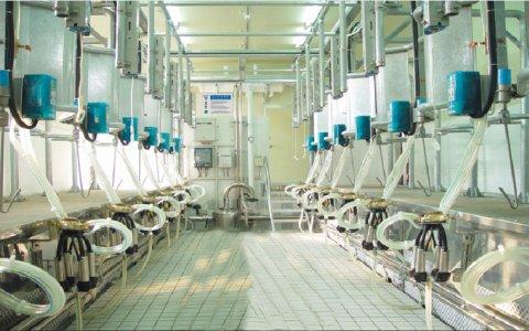 上海爱励鱼骨式挤奶机