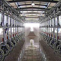 广州万日double-row-herringbone双列鱼骨式挤奶机