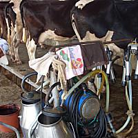 广州万日movable-type移动式挤奶机