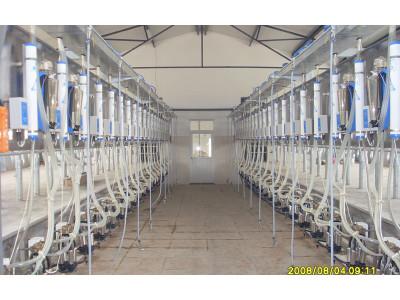 广州万日大型并列式挤奶机
