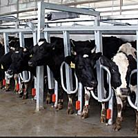 北京京鵬擠奶機設備