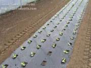 FPCSELF法拉力鋪膜秧苗移栽機