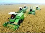 谷王系列水稻机