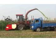 中農博遠4QZ-2800青貯飼料收獲機作業視頻