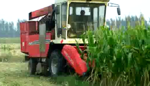 中農博遠4YZ-3B玉米收獲機作業視頻