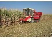 中農博遠4YZ-4B自走式玉米聯合收獲機作業視頻