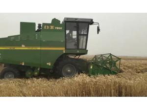 中联谷王TB60小麦机在湖北襄阳田间高效的作业视频