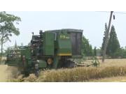 中联重科谷王TB60小麦机在四川实地作业视频