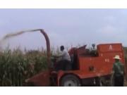 河北冀新牌两行青储玉米收割机作业视频
