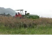 中联谷王水稻机PL40收割油菜作业视频1