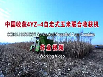 中收自走轮式谷物联合收割机作业视频