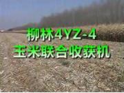柳林4YZ-4玉米聯合收獲機作業視頻