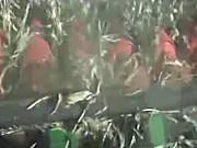天人迪尔9660现场收获作业视频