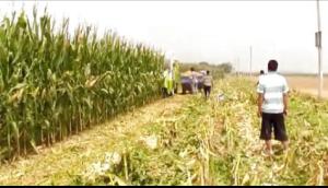 花溪玉田4YZB-2型自走式玉米收獲機河南焦作收割現場視頻