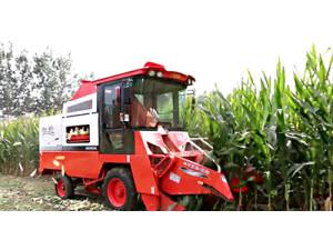 山西仁达4YZX-2B玉米收割机作业视频