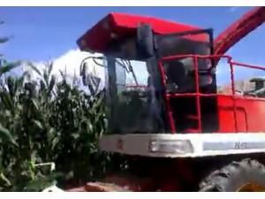 中機美諾9265青貯收割機作業視頻