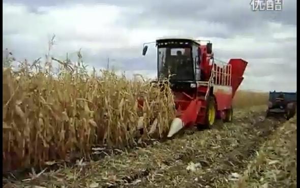 雷沃谷神CP04自走式玉米收割机作业视频
