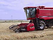 凯斯AF4000轴流滚筒收割机作业视频