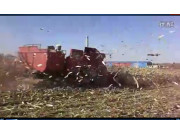新疆牧神玉米收割機作業視頻