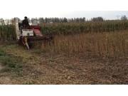 雷沃RG35履帶黃豆收割機作業視頻