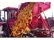 雷鸣重工4YZB-4玉米收割机卸粮视频