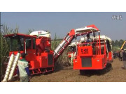 广东科利亚4GZ-130型切段式甘蔗联合收割机作业视频