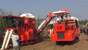 廣東科利亞4GZ-130型切段式甘蔗聯合收割機作業視頻