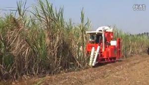 广东科利亚4GZ-91型切段式甘蔗联合收割机作业视频