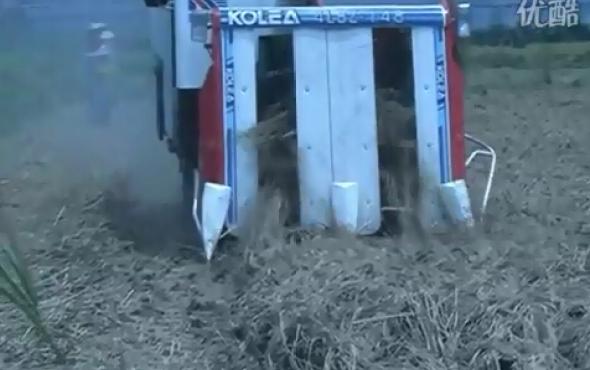 廣東科利亞4LBZ系列半喂入聯合收割機作業視頻