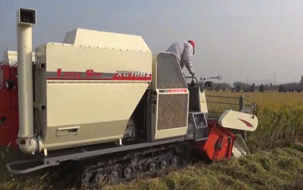 星光農機收割機作業視頻