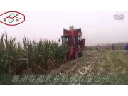 德州春明4YZQP-3型穗茎兼收玉米收获机作业视频