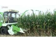 河北雷肯4YZ-3A1玉米青储秸秆联合收割机