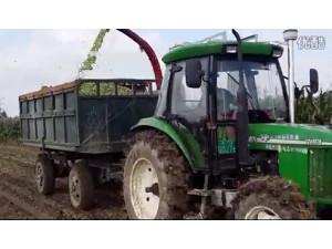 新疆牧神4QZ-2200自走式青(黄)贮饲料收获机作业视频
