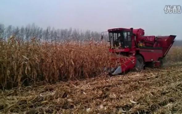 新疆牧神4YZB-5自走式玉米收獲機工作視頻